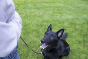 adiestramiento-canino-2