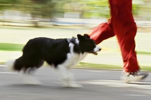 ejercicio-perro