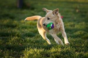 juego-perro