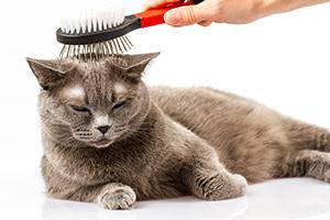 cepillar-gato-2
