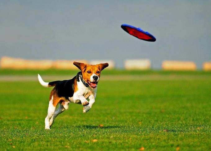 Disco perro Disc Dog