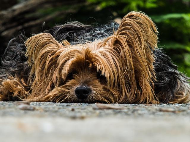 A qué temen los perros