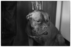 dog-653902_640