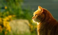 gato-nombres-webanimales