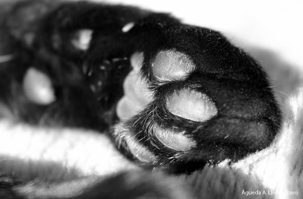huella-gato