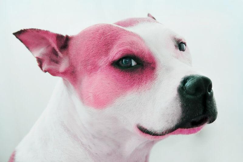 PINK_DOG_by_PeachDaub