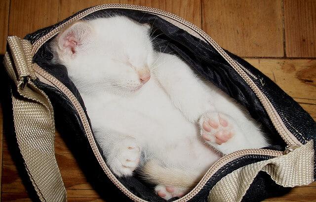 cat-20841_640