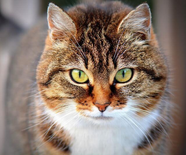 cat-300572_640 (1)