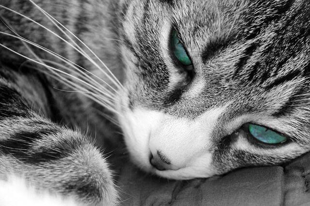 Como quitar la diarrea a un gato