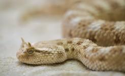 snake-208585_640