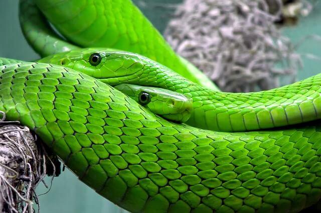 snake-653639_640