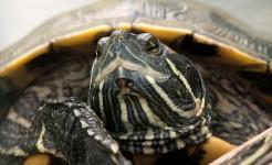 turtle-641462_640