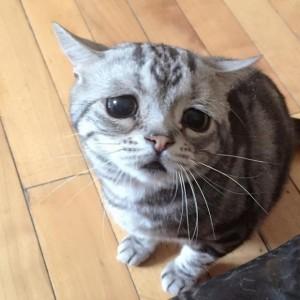 gato-triste-luhu-maggie-liu-5