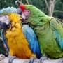 macaw-498671_640