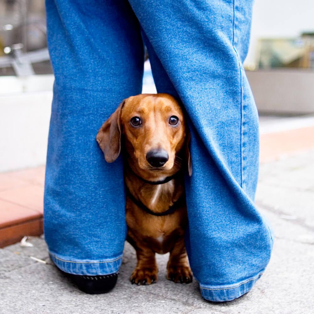perro_con_miedo_hacia_las_personas