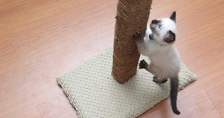 rascador gato 3