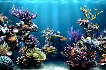 Tipos de acuarios for Clases de peces de acuario