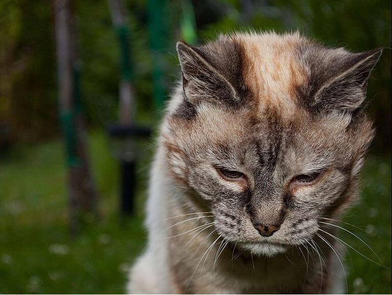 Gato mayor 2