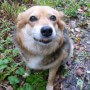 dog-57201_640