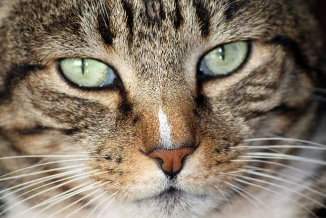 gato ciego