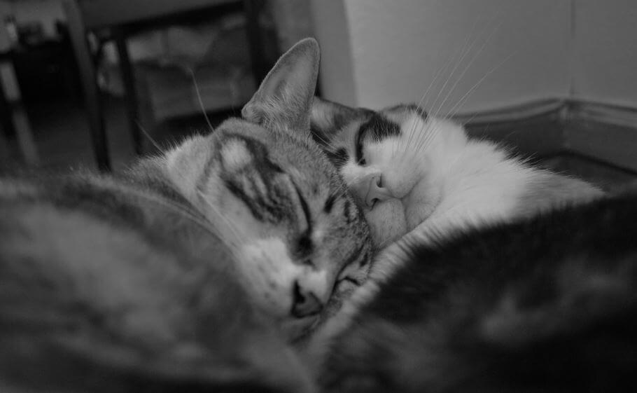 Aingeru uxoa durmiendo
