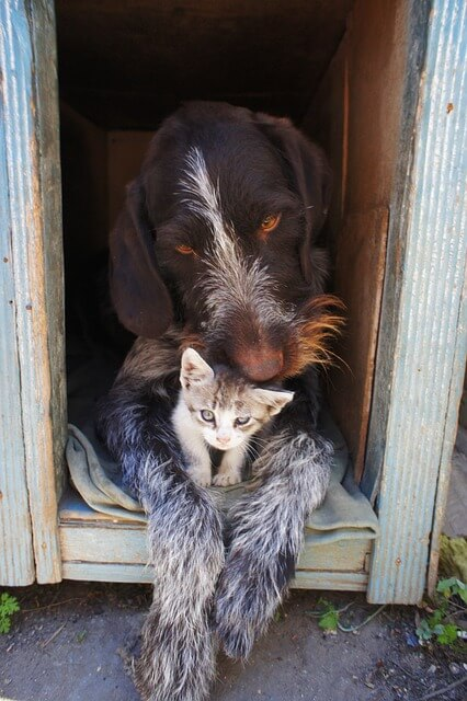 dog-and-cat-211503_640