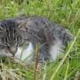gato durmiendo2