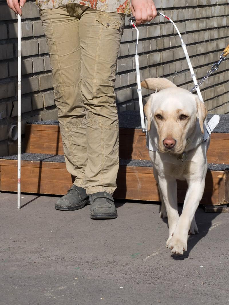 SVVP_Klikatá,_pes_scházející_schody