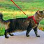 Paseo gato