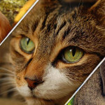 comunidad-mascotas