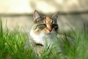 gato-pelo