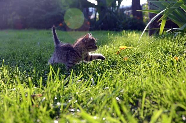gatos paseo