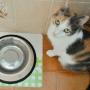 Lisa comer