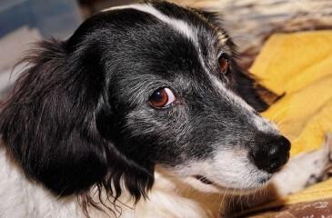 dog-930908_640