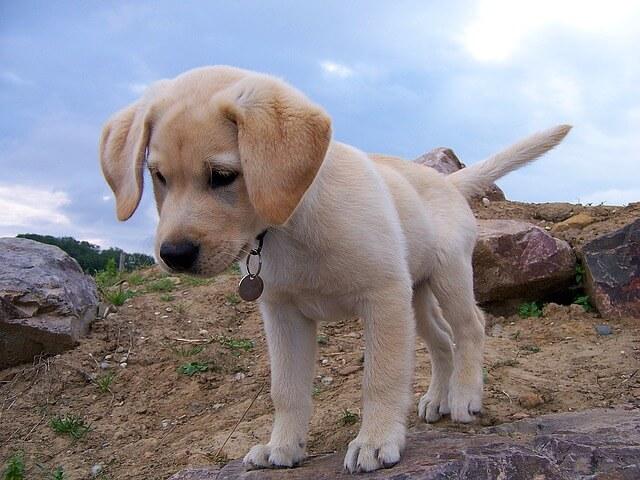 dog-954520_640