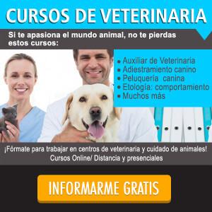 cursos de veterinaria