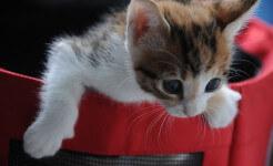 small-cat-868152_640