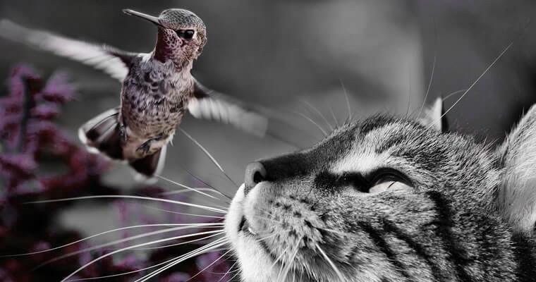 gato y pajaro