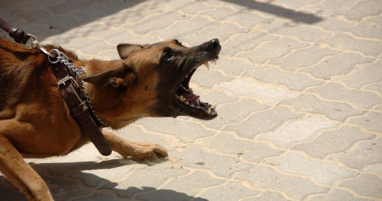 perro ladra