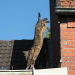 gato salta