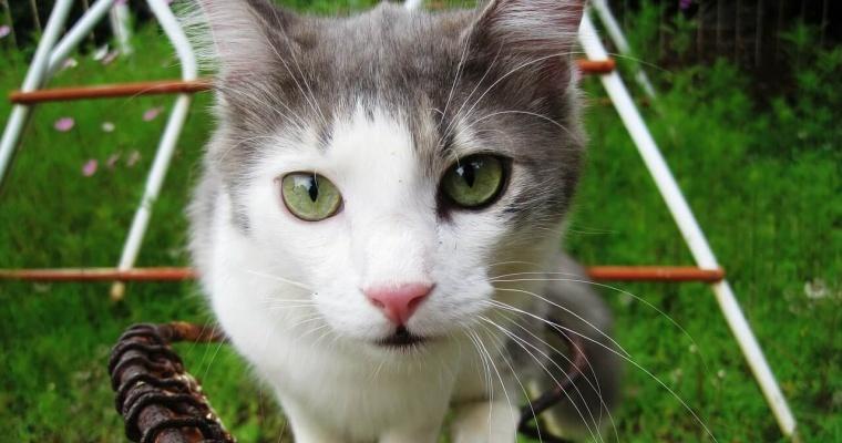 Los Gatos Más Bonitos Del Mundo Webanimalescom