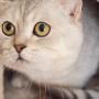 cat-938667_1280