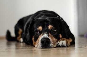 Los perros también tienen agujetas