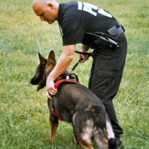 Man and dog  a police K-9 unit  demonstrate search and rescue skills in North Coventry Township PA. 2004-10-02.