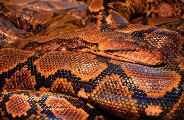 La serpiente más venenosa del mundo
