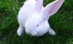 Cómo cuidar un conejo enano