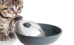 fuente-para-gatos-barata