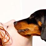 Tener una mascota ayuda a aliviar estrés