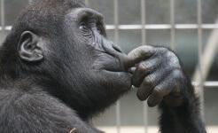 Un mono como mascota