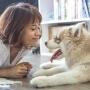 Cómo saber si un perro es feliz
